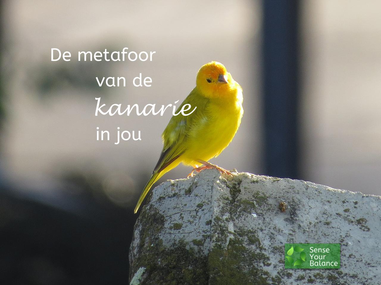 De metafoor van de kanarie in jou - Sense Your Balance - IJsselstein